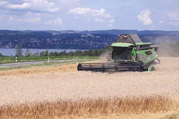 Bodanrück Weizenernte